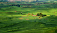 THE PALOUSE - Carol Martinez